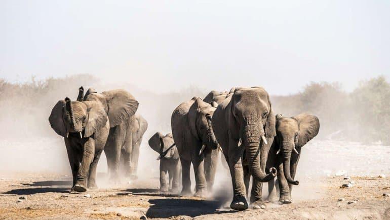 """""""Fil kavgası"""" büyüyor"""