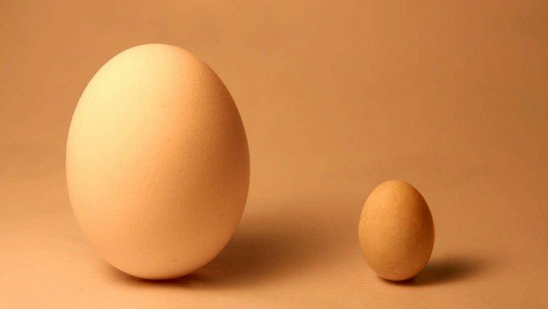 Yumurtadan yumurta çıktı!