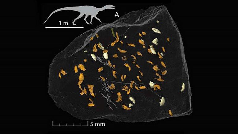 Dünya'nın en eski böceği keşfedildi